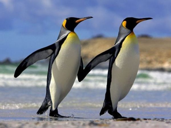 penguins_a_bunch_640_06